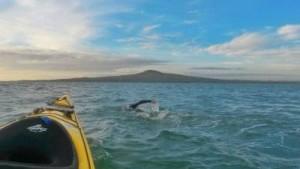 Swim to Rangitoto