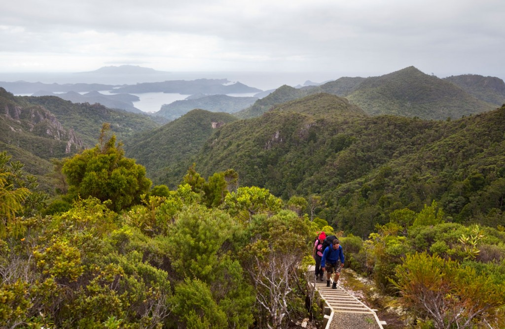 Hiking Great Barrier Island. New Zealand.