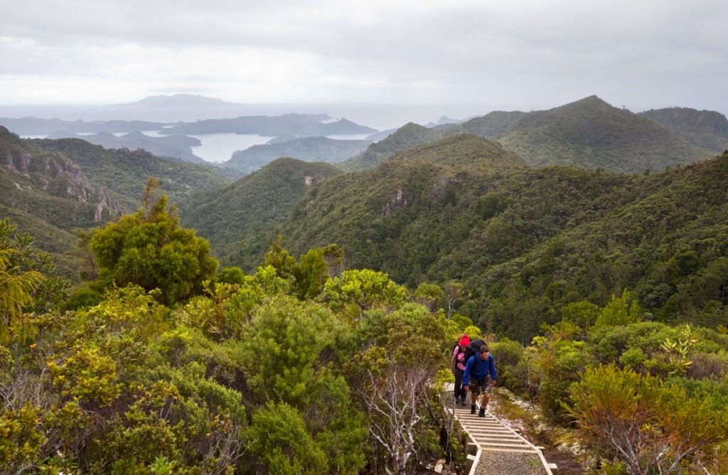 Hiking Great Barrier Island. New Zealand.