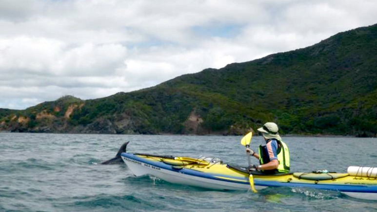 Great Barrier island sea kayak tour photo 4