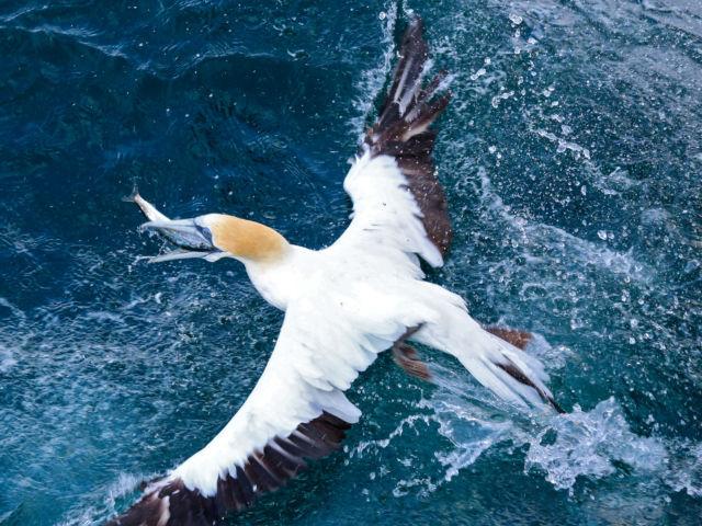 Sea birds in Auckland