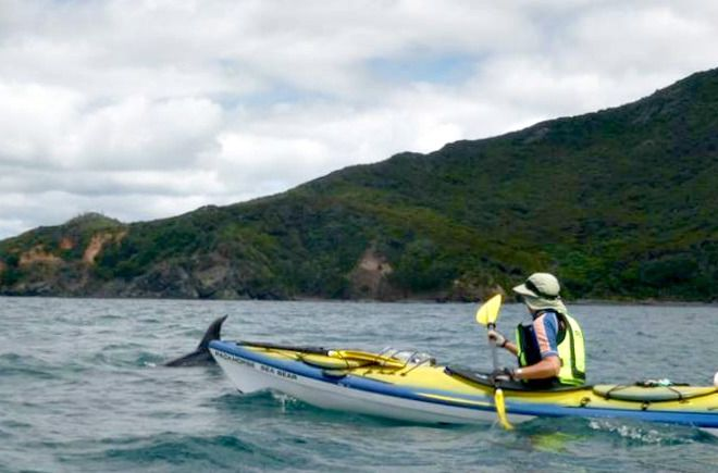 Great barrier island sea kayak
