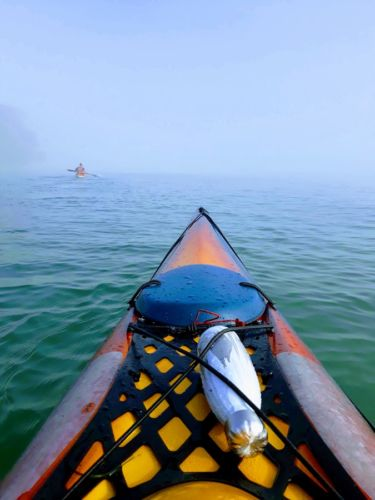 Auckland Sea Kayaks Adventures on Tīkapa Moana Nigel Cherrie